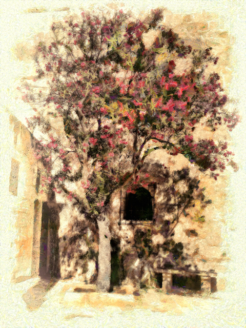 the-tree-in-the-corner-of-the-courtyard-for-blog