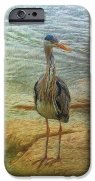 heron-today-gone-tomorrow-leigh-kemp (2)
